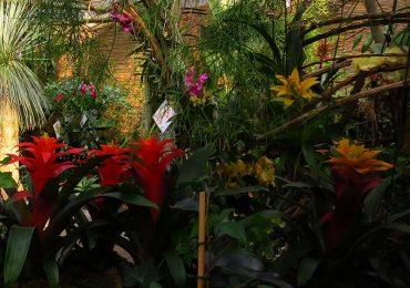 Bromelie Dschungel und Exoten
