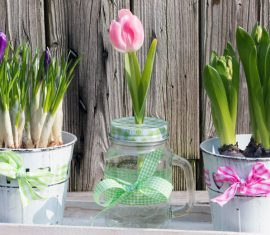 Frühlingsblumen für die Wohnung