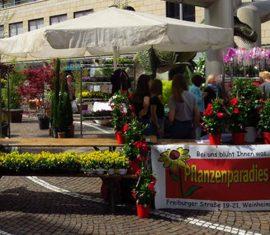 Pflanzenparadies auf dem Pflänzlemarkt in Weinheim
