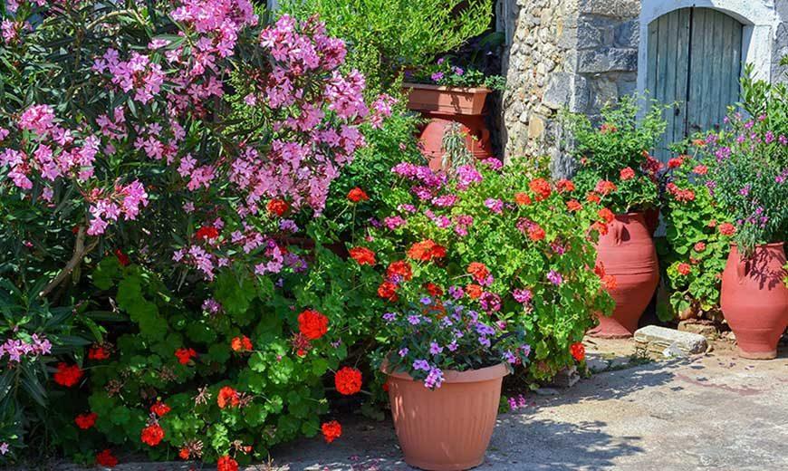 Der Mediterrane Garten Pflanzenparadies Weinheimde