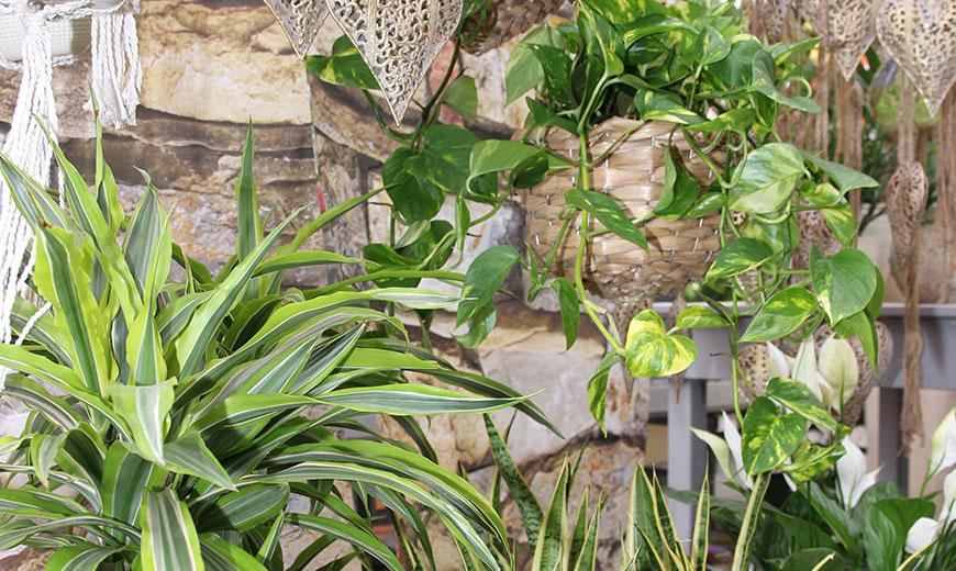 Pflanzen sind gut für das Raumklima